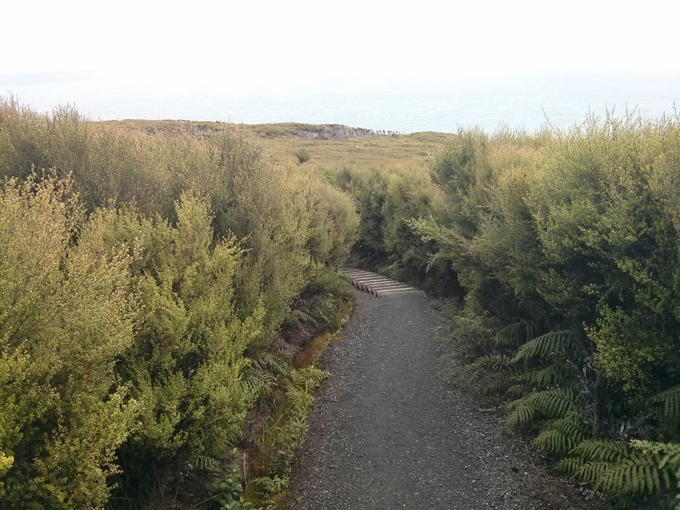 Part of the Bluff Hill walking path.