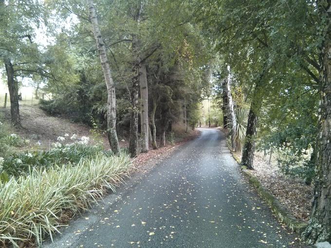 The Claremount Castle entrance road.