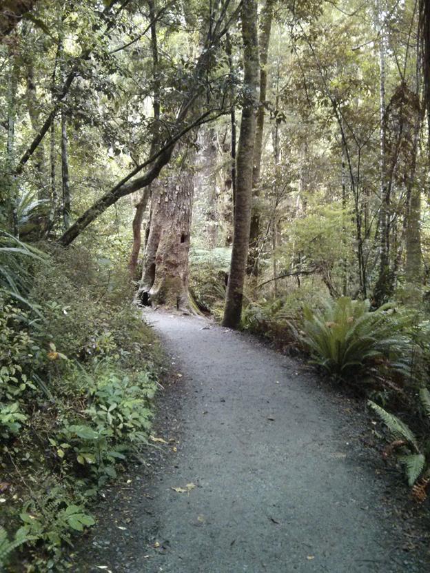Purakaunui Falls walking path