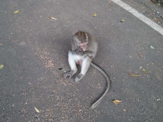 Bali-Ubud-Monkey Forest-01