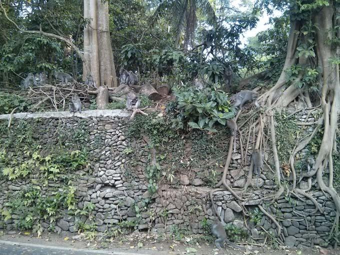 Bali-Ubud-Monkey Forest-02