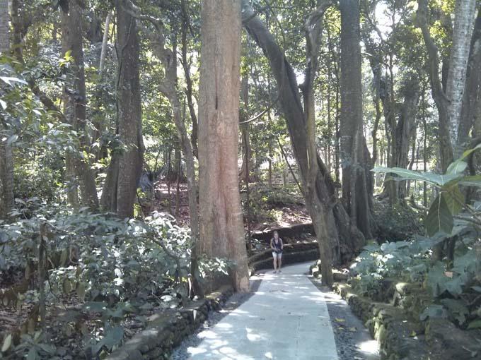 Bali-Ubud-Monkey Forest-03