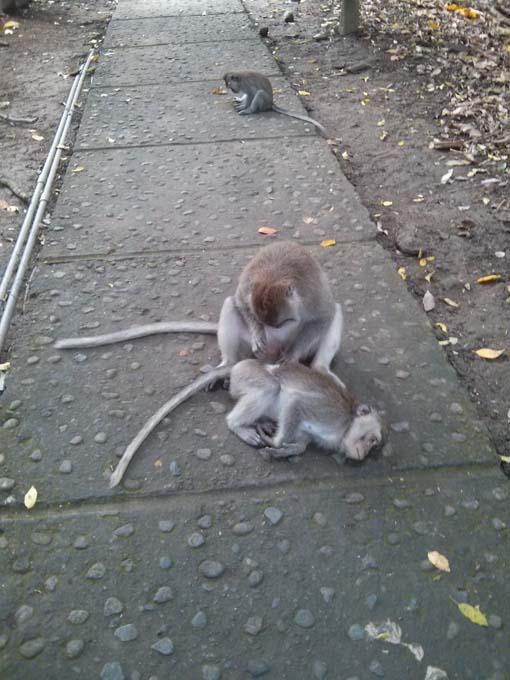Bali-Ubud-Monkey Forest-07