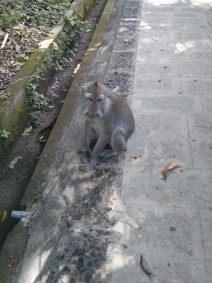 Bali-Ubud-Monkey Forest-09