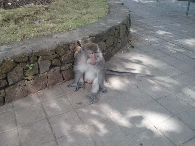 Bali-Ubud-Monkey Forest-13