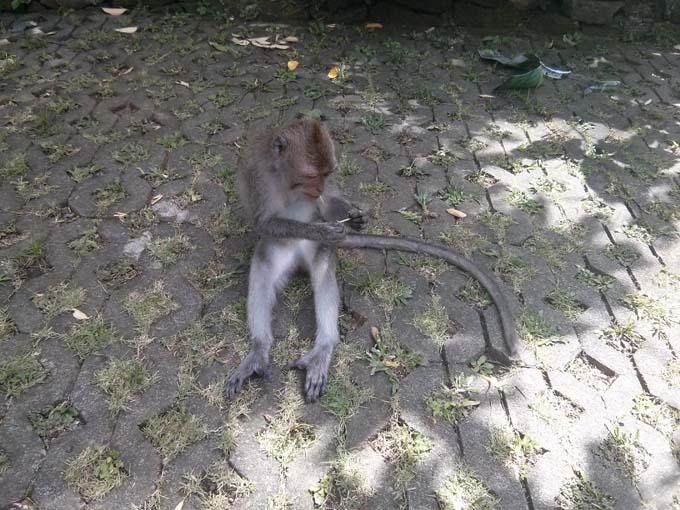 Bali-Ubud-Monkey Forest-14