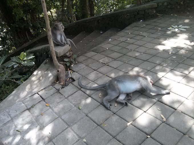 Bali-Ubud-Monkey Forest-16