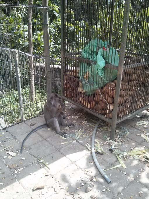 Bali-Ubud-Monkey Forest-17