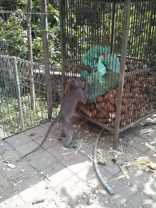 Bali-Ubud-Monkey Forest-18