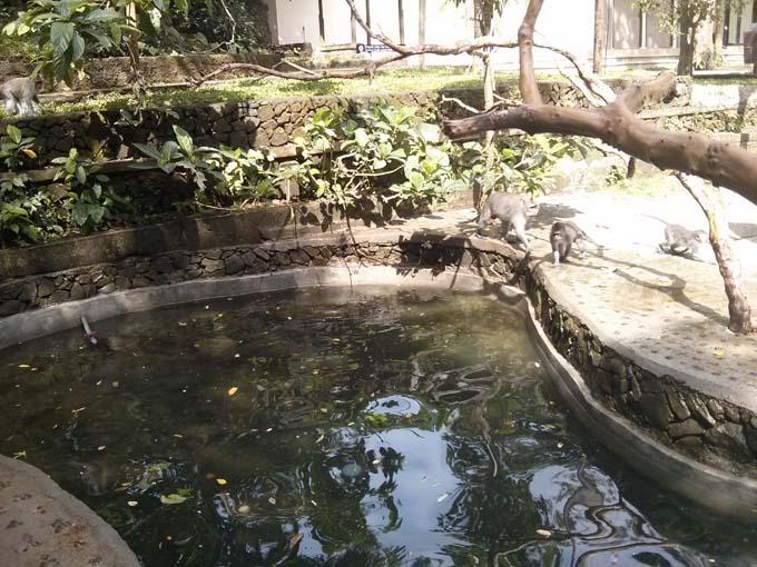 Bali-Ubud-Monkey Forest-24