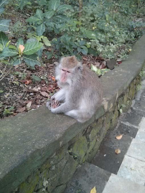 Bali-Ubud-Monkey Forest-27