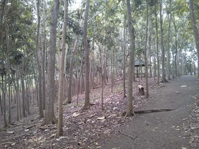 Bali-Ubud-Monkey Forest-28