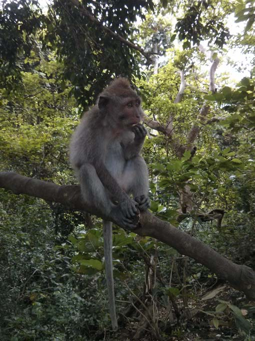 Bali-Ubud-Monkey Forest-29