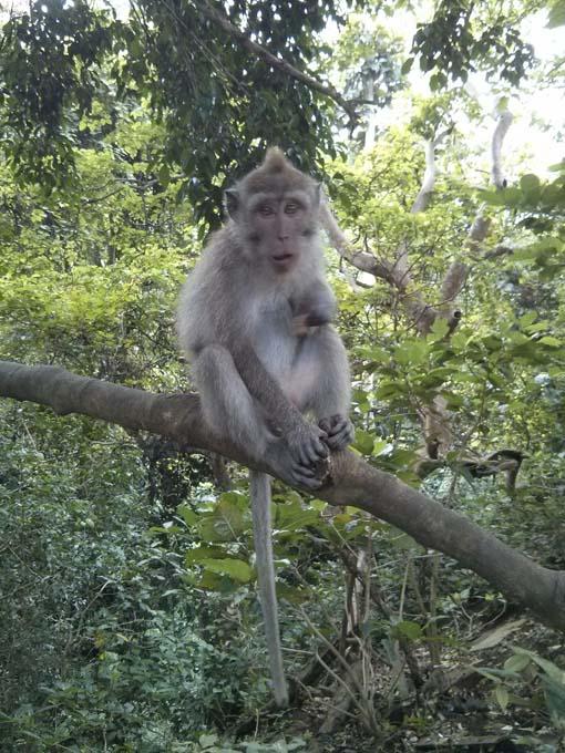 Bali-Ubud-Monkey Forest-30
