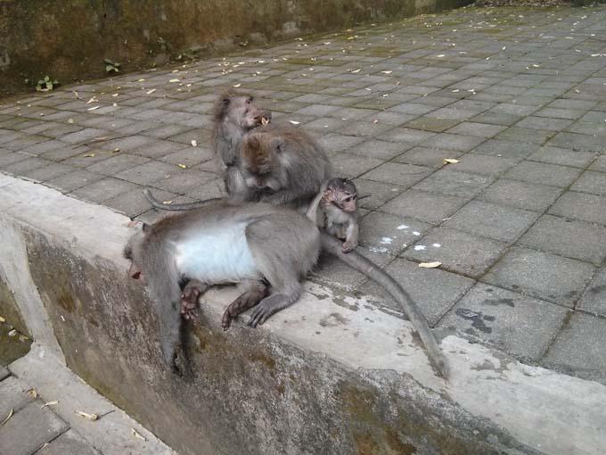Bali-Ubud-Monkey Forest-32