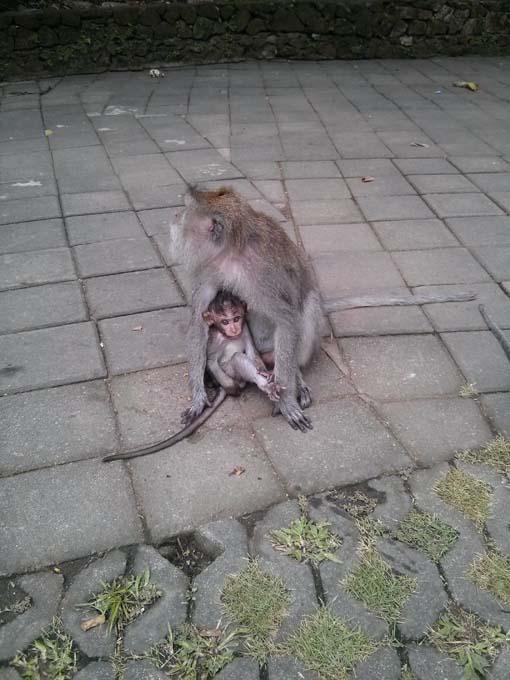Bali-Ubud-Monkey Forest-34