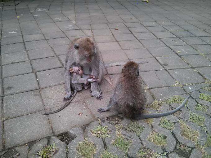 Bali-Ubud-Monkey Forest-35