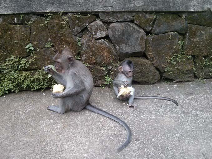 Bali-Ubud-Monkey Forest-36