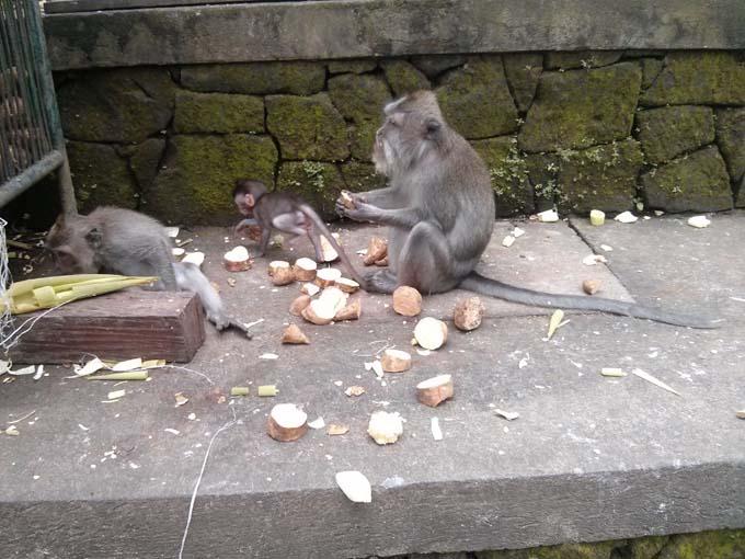 Bali-Ubud-Monkey Forest-37