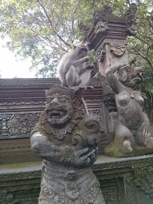 Bali-Ubud-Monkey Forest-38