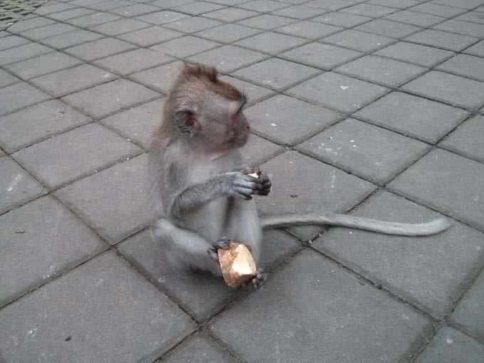 Bali-Ubud-Monkey Forest-39