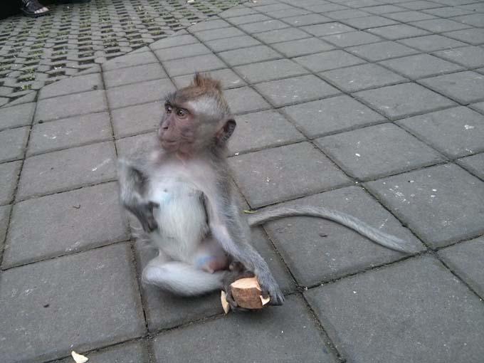 Bali-Ubud-Monkey Forest-43