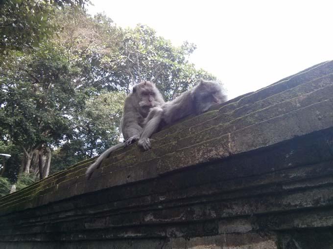 Bali-Ubud-Monkey Forest-51