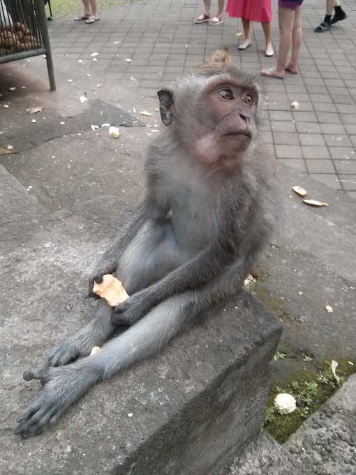 Bali-Ubud-Monkey Forest-54