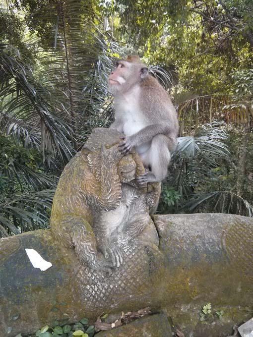Bali-Ubud-Monkey Forest-55