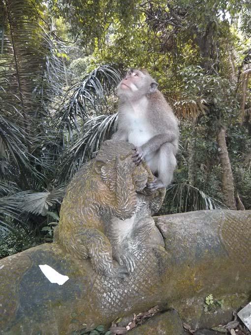 Bali-Ubud-Monkey Forest-56