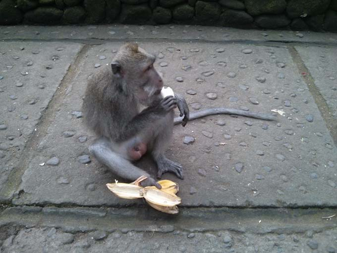 Bali-Ubud-Monkey Forest-58