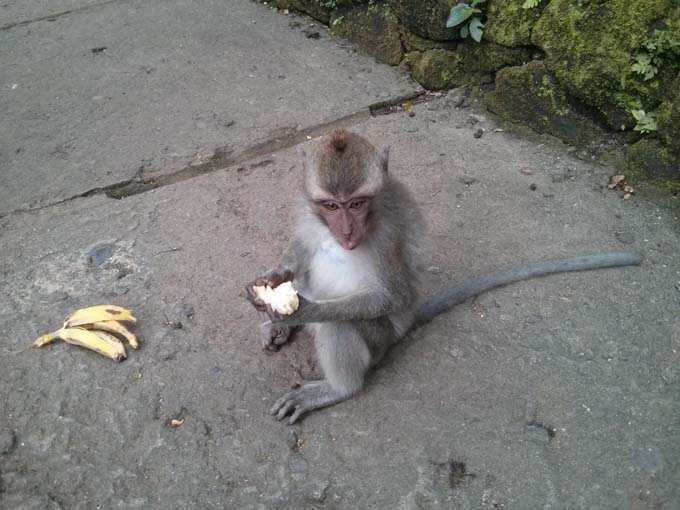 Bali-Ubud-Monkey Forest-59
