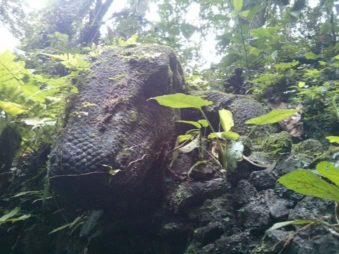 Bali-Ubud-Monkey Forest-64
