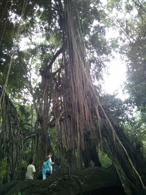 Bali-Ubud-Monkey Forest-67