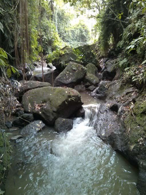 Bali-Ubud-Monkey Forest-72