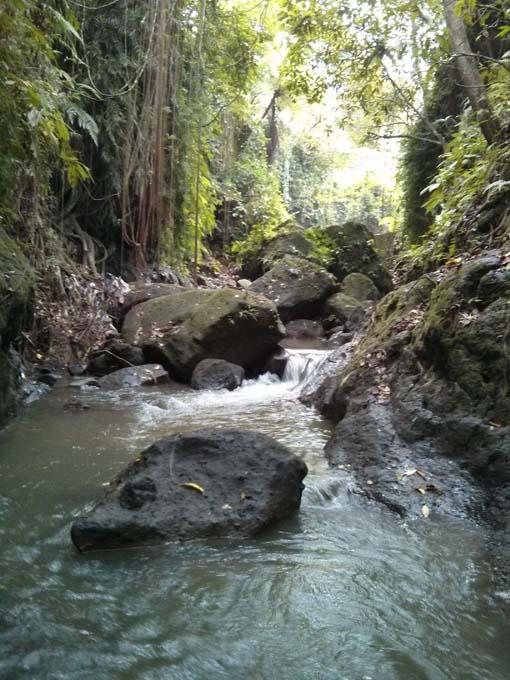 Bali-Ubud-Monkey Forest-73