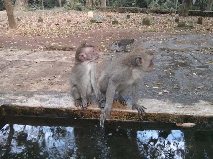 Bali-Ubud-Monkey Forest-76