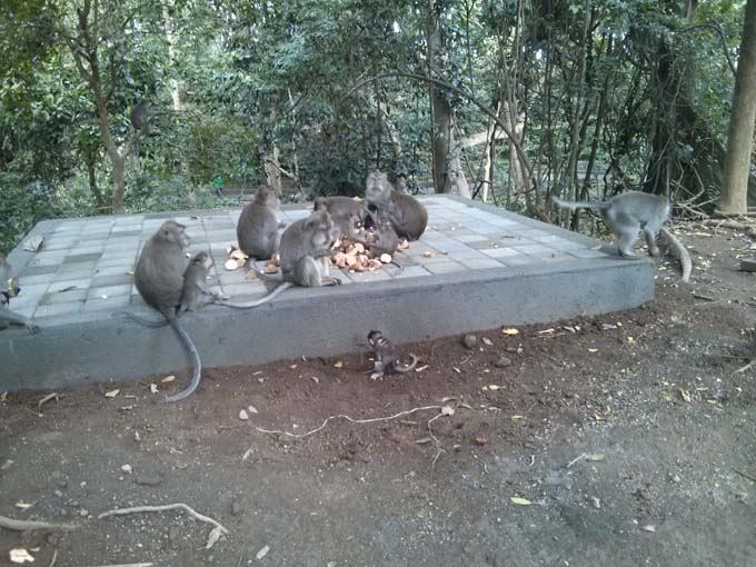 Bali-Ubud-Monkey Forest-79