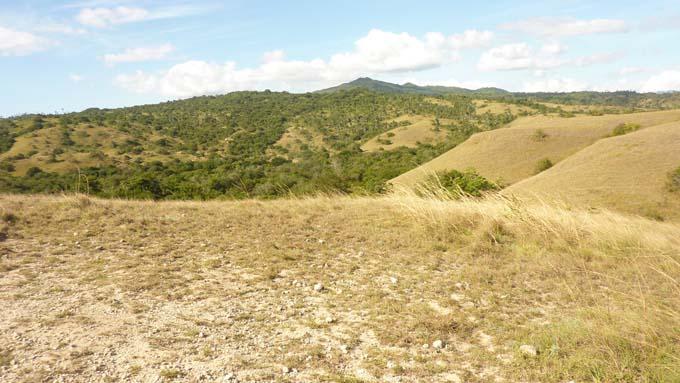 Rinca Island landscape.