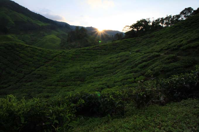 Indonesia-CH-34-BOH Tea Plantation