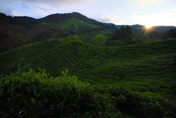Indonesia-CH-35-BOH Tea Plantation