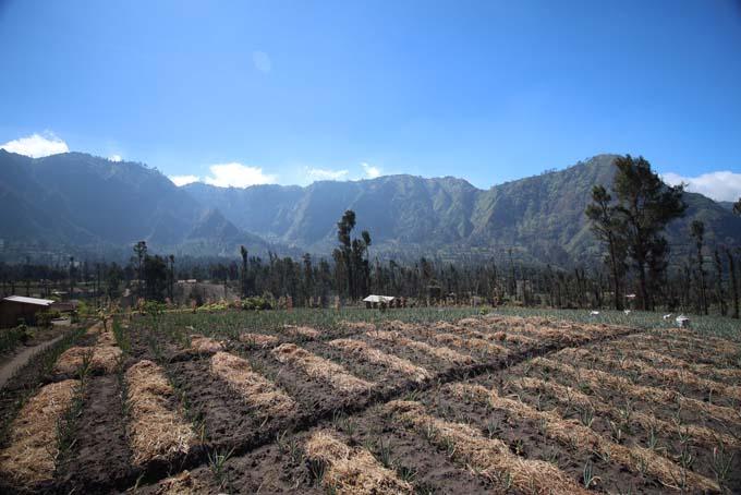 Indonesia-Mt Bromo-29