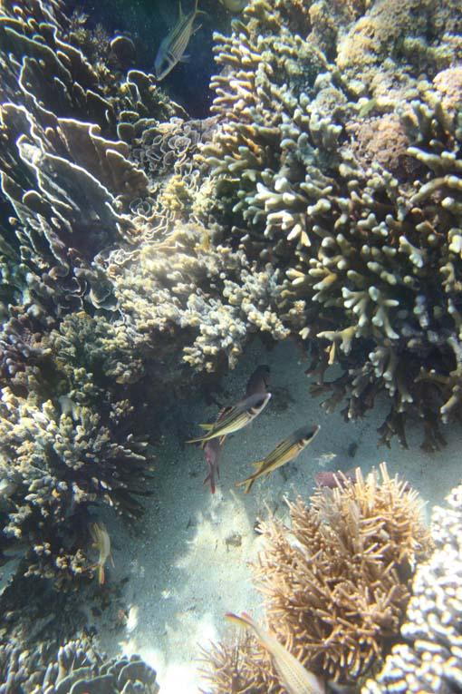Indonesia-Sabolon-19