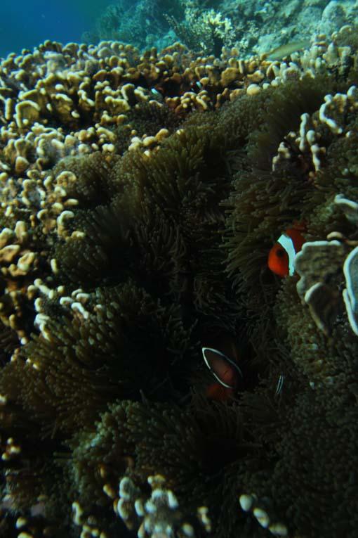 Indonesia-Sabolon-31