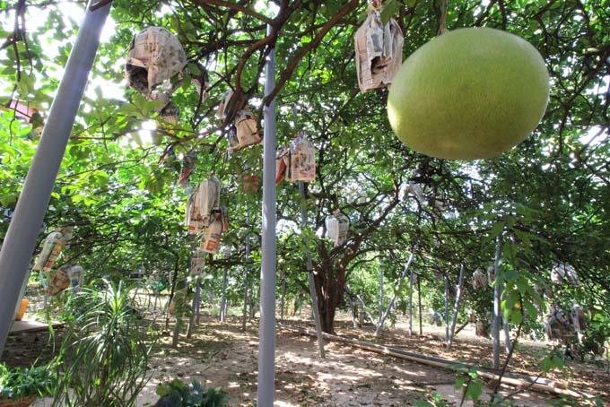 Malaysia-Ipoh Fruit Garden-02
