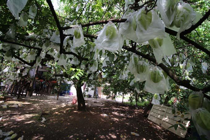 Malaysia-Ipoh Fruit Garden-04