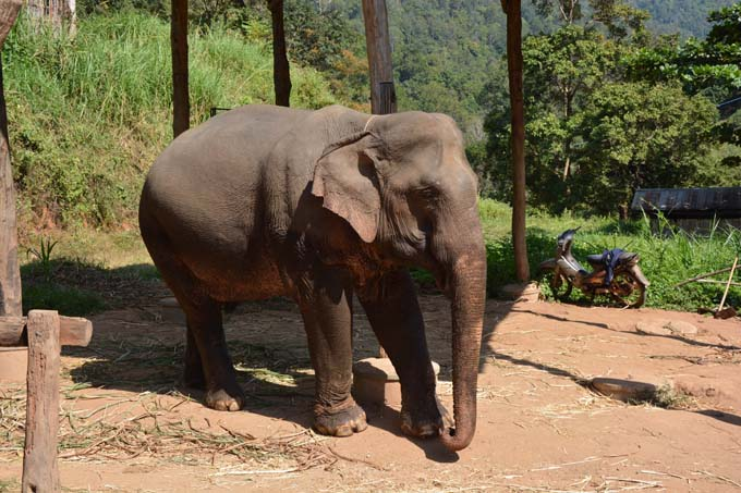 Chiang Mai-Elephant Riding-010