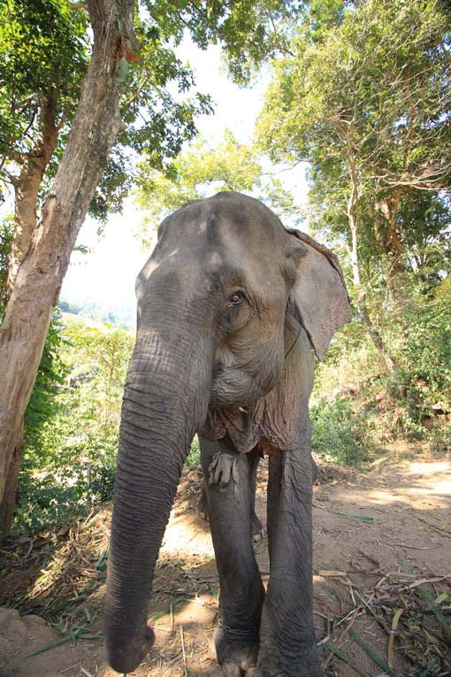 Chiang Mai-Elephant Riding-012