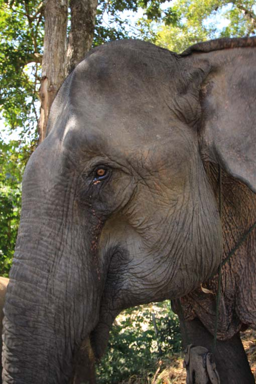 Chiang Mai-Elephant Riding-013