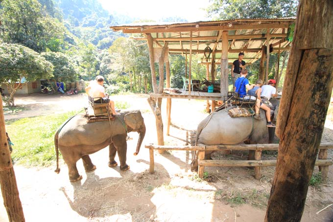 Chiang Mai-Elephant Riding-033